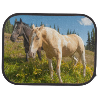 Curious horses foraging on grass car mat