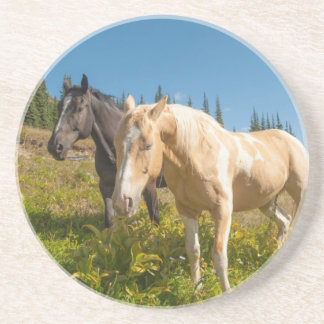 Curious horses foraging on grass drink coasters
