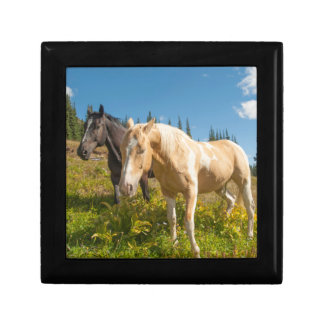 Curious horses foraging on grass gift box