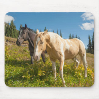 Curious horses foraging on grass mouse mat