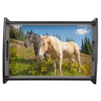 Curious horses foraging on grass serving tray