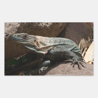 Curious Iguana Rectangular Sticker