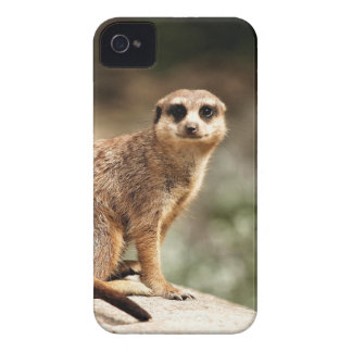 Curious iPhone 4 Case