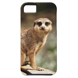 Curious iPhone 5 Covers