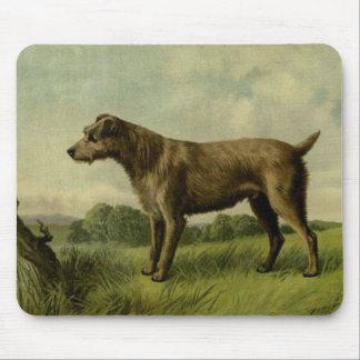 Curious Irish Terrier Mouse Mat
