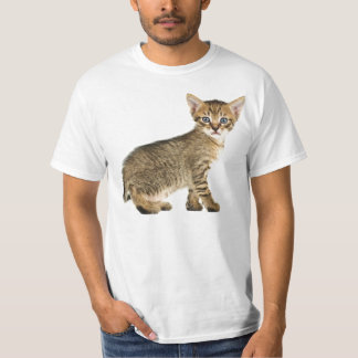 Curious Kitten T-Shirt