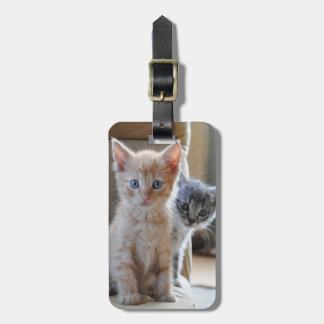 Curious Kittens Luggage Tag