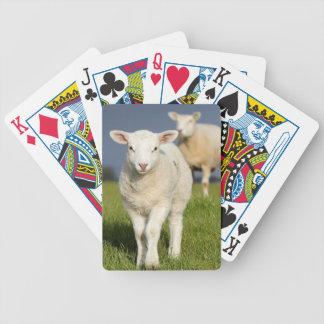 Curious Lamb Bicycle Playing Cards