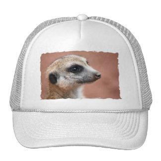 Curious Meerkat Baseball Cap Mesh Hats