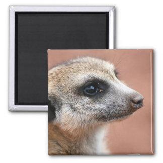 Curious Meerkat Square Magnet