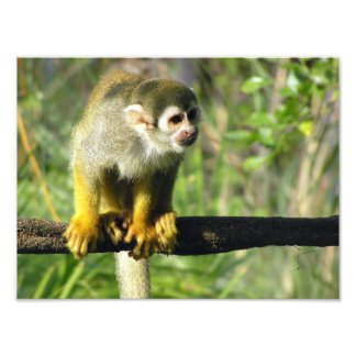 Curious Monkey by Don Maples Photographic Print