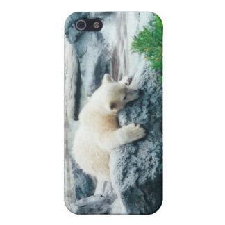 Curious Polar Bear Cub iPhone Case iPhone 5 Case