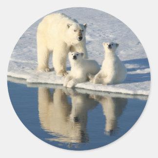 Curious Polar Bear Family Classic Round Sticker