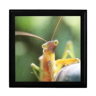 Curious Praying Mantis Jewelry Boxes