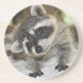 Curious Raccoon Coaster