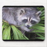 Curious Racoon Mouse Pad