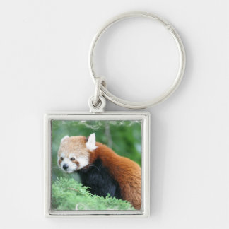 Curious Red Panda Keychain