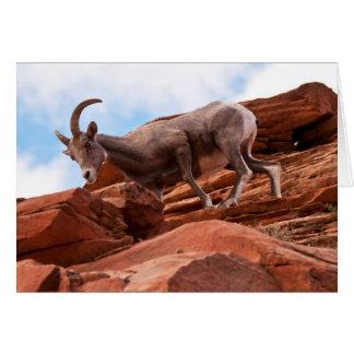 Curious Rock Climber Cards