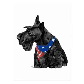 Curious Scottish Terrier Patriotic Post Card