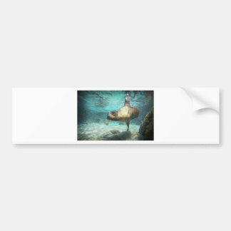 Curious sea lion Galapagos underwater Bumper Stickers