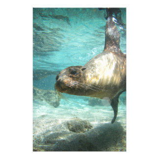 Curious sea lion Galapagos underwater Stationery