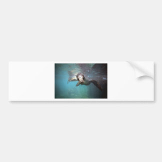 Curious sea lion underwater bumper stickers