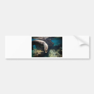 Curious sea lion underwater Galapagos Islands Bumper Sticker