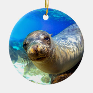 Curious sea lion underwater Galapagos paradise Christmas Ornament