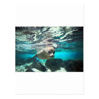 Curious sea lion underwater tropical ocean postcard