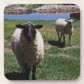 Curious Sheep Coasters