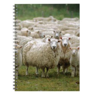 Curious Sheep Notebooks