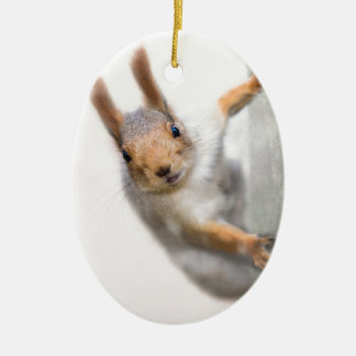 Curious squirrel ceramic oval decoration
