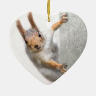 Curious squirrel christmas ornament