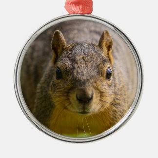 Curious Squirrel Christmas Ornament