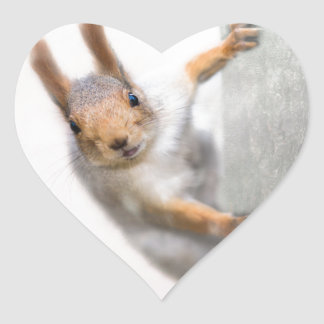 Curious squirrel heart sticker