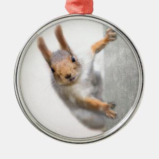 Curious squirrel metal ornament