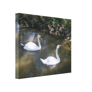 Curious Swans Gallery Wrap Canvas