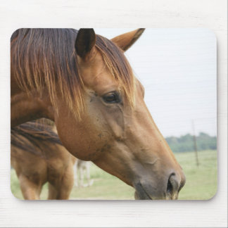 Curious Thoroughbred Mouse Pad