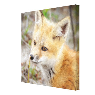 Curious Young Fox Kit Canvas Print