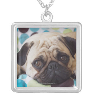 curious young pet silver plated necklace