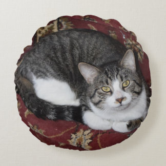 Curl up with a cat round cushion