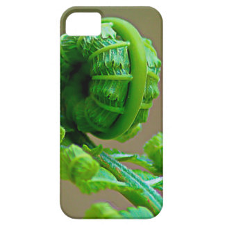 Curled up Fern iPhone 6 Case iPhone 5 Case