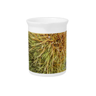 curly chestnut pitcher