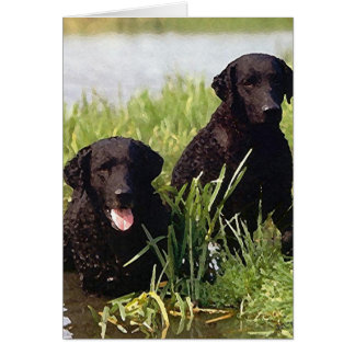 Curly Coated Retriever Dog Blank Greeting Card