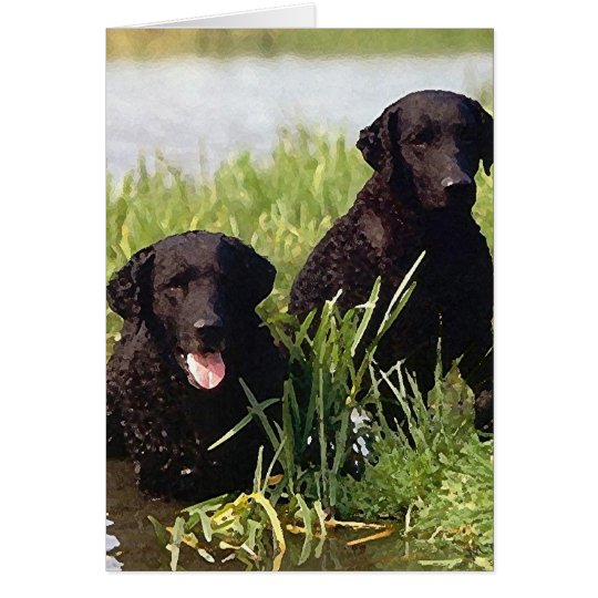 Curly Coated Retriever Dog Blank Greeting Card