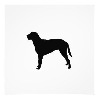 Curly Coated Retriever hunting dog Silhouette Photographic Print
