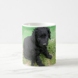 curly coated retriever puppy.png coffee mug