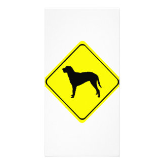 Curly Coated Retriever Warning Sign Love Dogs Photo Card