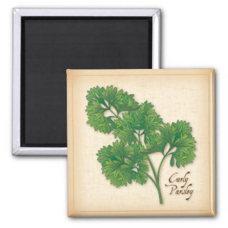 Curly Parsley Herb Magnet