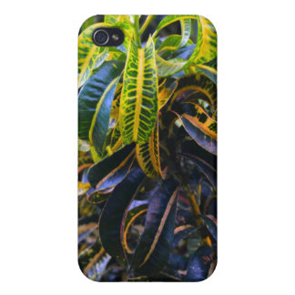 Curly Tropical Plant Speck iPhone Case iPhone 4 Case
